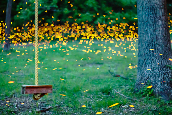 Fireflies by the Rope Swing