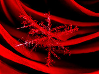 Snowflake on Rose